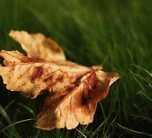 Leaf by TheFirefly
