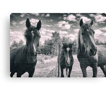 Horse Portrait Canvas Print