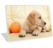 Labrador puppy lying on the sofa with his ball Laptop Skin