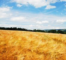 Ripening golden grains in Switzerland by Michael Brewer