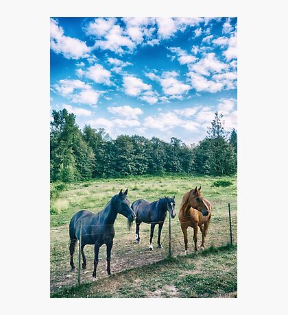 Horse Family Photographic Print