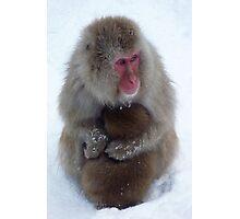 Snow monkeys, Jigokudani Photographic Print