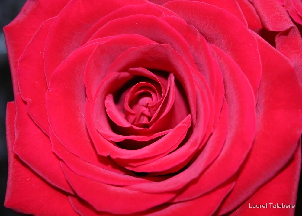 Silken Beauty by Laurel Talabere