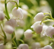 Lily of the valley by TheFirefly