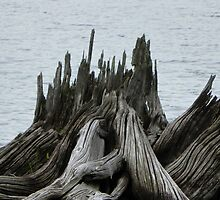 Driftwood Stump in Moxie Lake, Maine by MaryinMaine