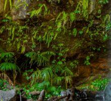 Curtis Falls - Mt Tamborine Qld Australia Sticker