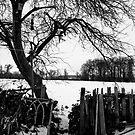 Snow by Luke Stevens