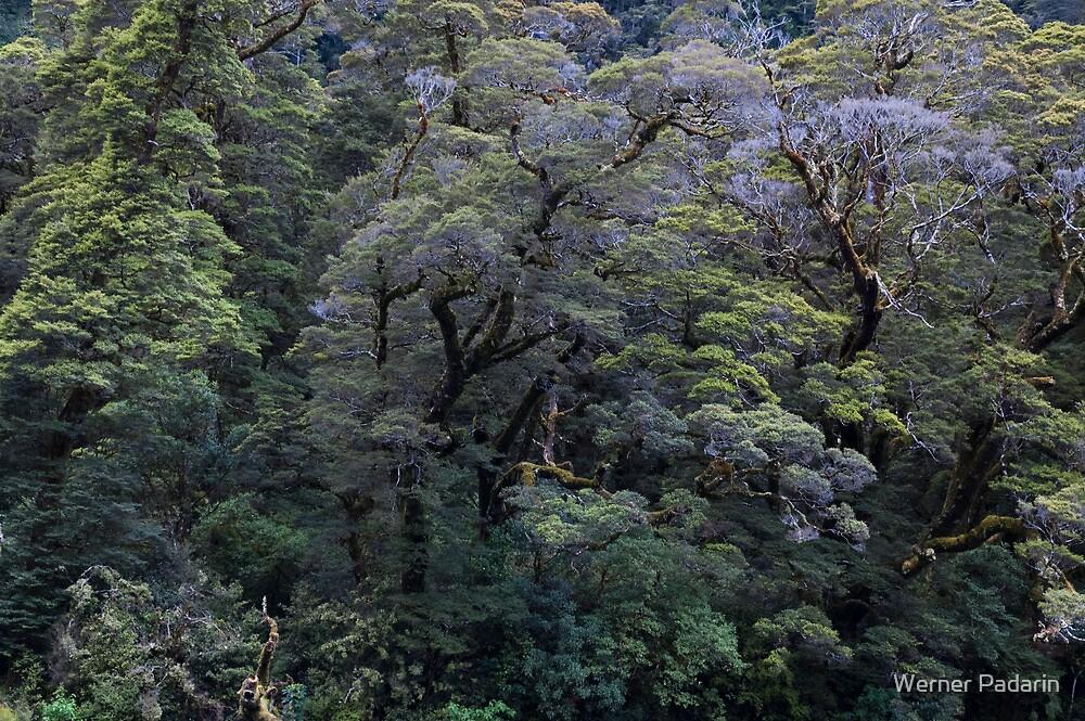 Fiordland 2 by Werner Padarin