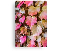 Autumn Leaves - Uralla NSW Australia Canvas Print