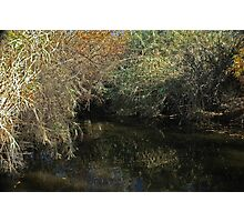 """ Bayou Reflections "" Photographic Print"