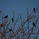 Red Winged Black Birds by Blackrock