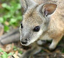 Australian Pademelon by ClocwisePicaso