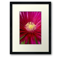 Into the Heat.... Framed Print