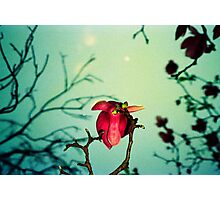 magnolia and moon Photographic Print