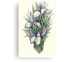 Beautiful iris - watercolor on textured paper Canvas Print