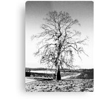 Gum Tree, Great Lakes, Tasmania Metal Print