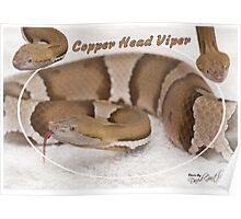 Copper headed Viper Poster