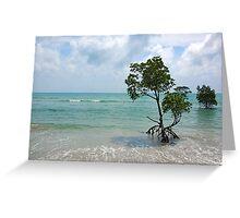 Mangroves, Far North Queensland. Greeting Card