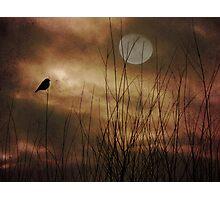 Lonely Marsh Photographic Print