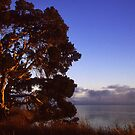 Morning Light - Lake Western Australia by Eve Parry