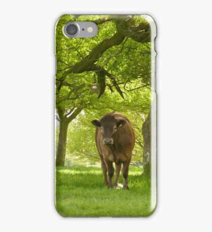 cow on beverley westwood iPhone Case/Skin