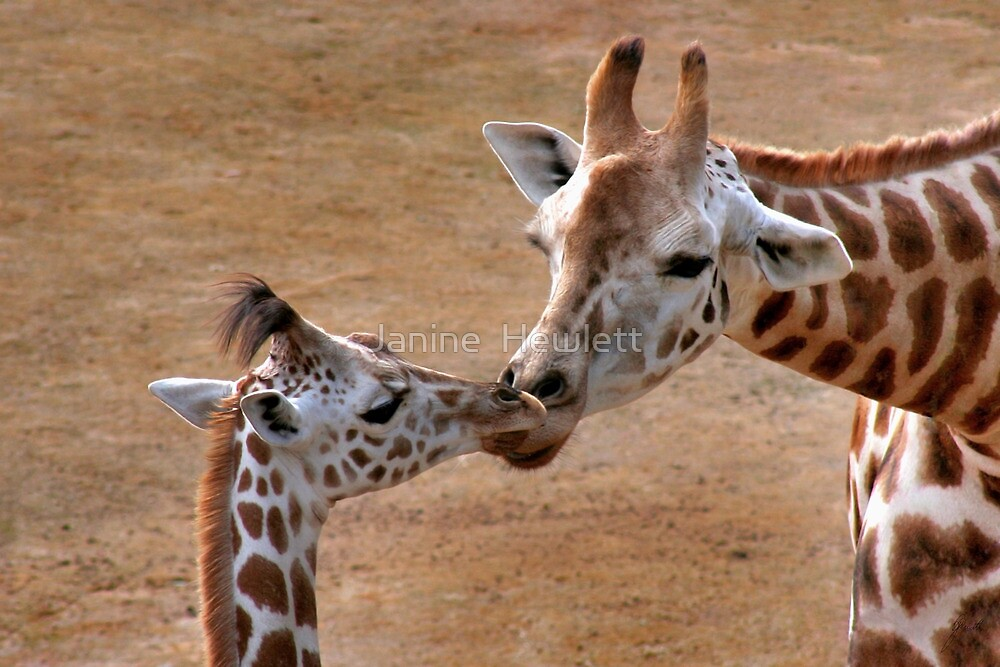 Mother and Child... by Janine  Hewlett