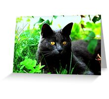 golden eyes Greeting Card