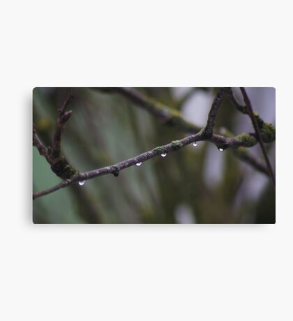 Droplets of Purity Canvas Print