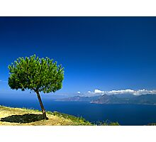 Lonley tree Photographic Print