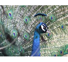 Look at my plumage Photographic Print