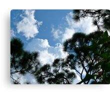 Sky of Pine Canvas Print