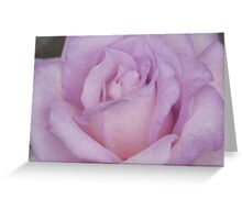 Lavander Rose 2 Greeting Card