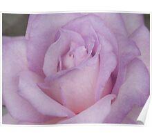 Lavander Rose 2 Poster