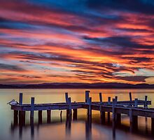 Squid's Ink Jetty Belmont NSW Australia by Beth  Wode