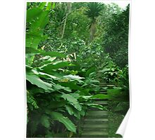 Stairs in the jungle Poster