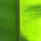 Banana, Light and shade by Guy Tschiderer
