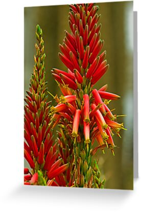 Desert Flower by JHRphotoART