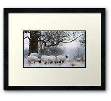 Winter Woollies. Framed Print
