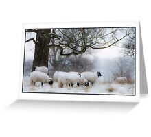 Winter Woollies. Greeting Card