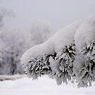 Winter walk by Bluesrose