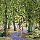 Nature Walk by Lynne Morris