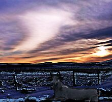 Alberta Sunset by Gail Bridger