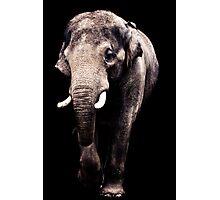 Asian Elephant Photographic Print