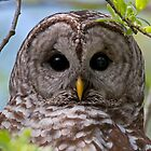 Barred Owl at McGregor Marsh by Martin Smart