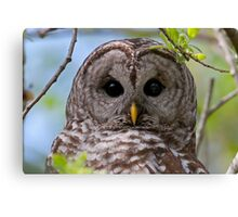 Barred Owl at McGregor Marsh Canvas Print