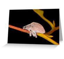 Cute Beetle on a Gum Twig Greeting Card