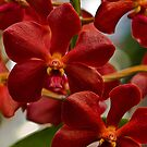 Red Orchids by JHRphotoART