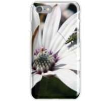 Osteospermum with insect iPhone Case/Skin