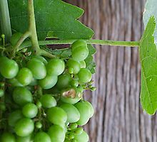 Close up grapes by Vicki Simmons