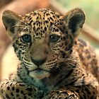 Baby Jag by Sandy Keeton